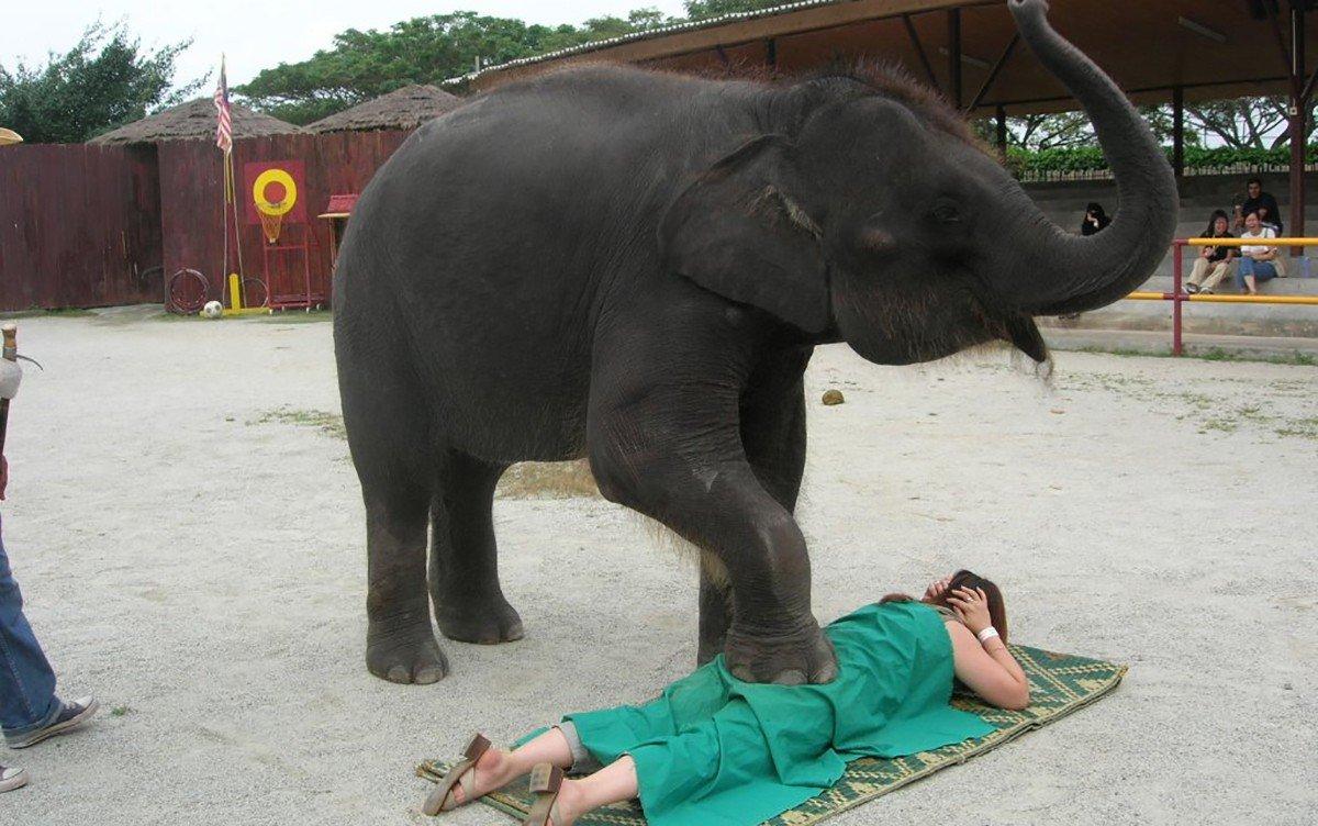 масаж със слон, слон, най-странните масажи, най-странните масажи в света